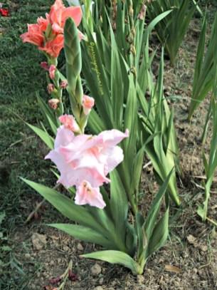 Ambil Bunganya yang masih kuncup begini jadi akan mekar dan lebih lama di vas bunga
