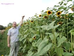 Frank tingginya 180 an cm, kalah dia sama tinggi bunga matahari