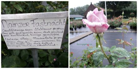 Mainzer Fastnacht Rose