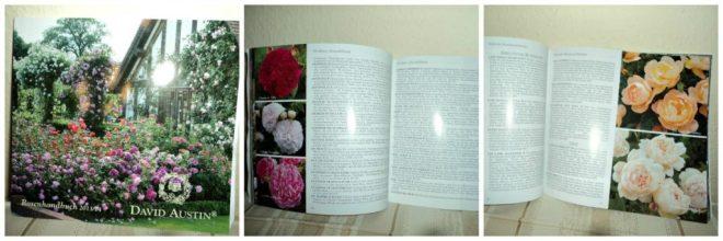 Katalog Bunga Mawar David Austin