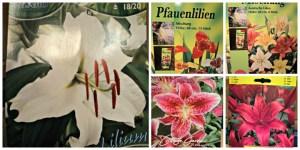 5 Macam Bunga Lili yang saya tanam. Ini Gambar-gambar kemasan bibit Bunga Lilinya.