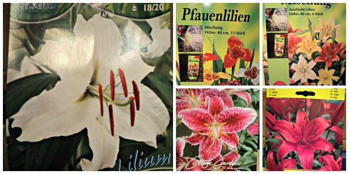 Bunga Lili dan Perawatannya. 5 Macam Bunga Lili yang saya tanam. Ini Gambar-gambar kemasan bibit Bunga Lilinya.