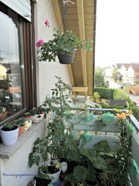 Kebunku di Balkon Depan