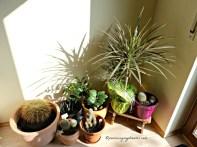 Matahari Pagi Bersinar ke bagian ini, jadi kaktus-katus pasti suka nih