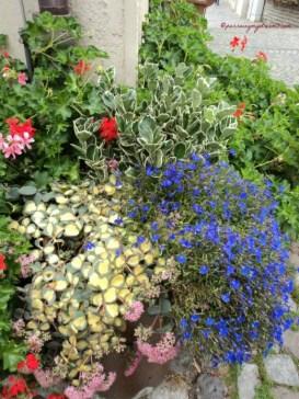 Kombinasi tanaman yang cantik