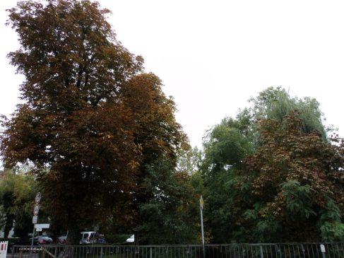 Daun-daun mulai berubah warna