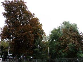 Daun-daun mulai berubah warna. Sinsheim 15.10.2013