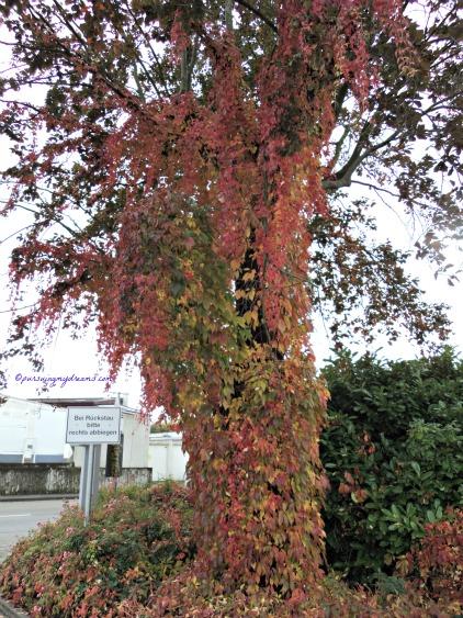 Cantik ya warna daun-daunnya