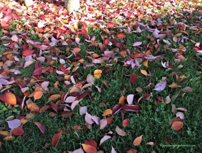"""""""Autumn is the hardest season. The leaves are all falling, and they're falling like they're falling in love with the ground."""" ― Andrea Gibson"""