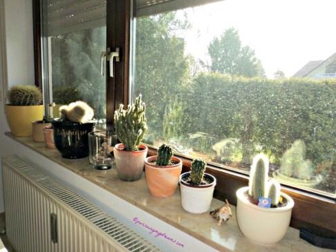 Kaktus-kasktus dipajang didepan Jendela supaya mendapat sinar matahari