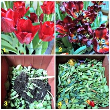 Memanfaatkan tanaman yang sudah selesai berbunga, untuk dibuat kompos untuk tanaman berikutnya yang akan ditanam