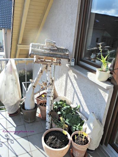 Balkon Belakang. Rumah Burung itu untuk taruh makanan buat burung liar, berhubung musim dinginya tidak parah jadi ga ada burung yg datang cari makan