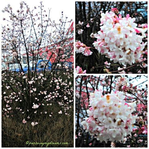 Pohon Musim semi. Small Spring tree