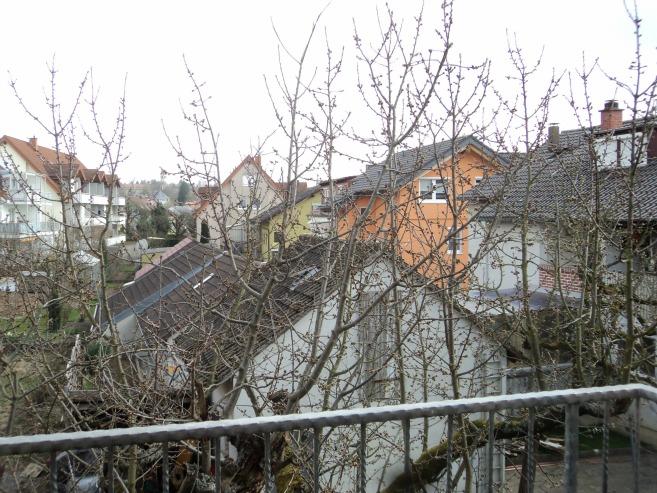 Pohon Ceri tetangga sudah banyak bakal bunganya