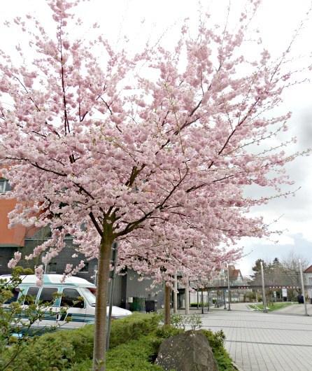 Musim Semi di Sekitarku (Bagian 2)