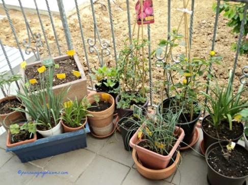 Kalau lagi hujan pot-pot tanaman saya jejer begini supaya dapat air gratis hahaha