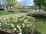 Senangnya Melihat Banyak bunga-bunga Indah begini. Ada Daffodil, Hyacint, tulip dll