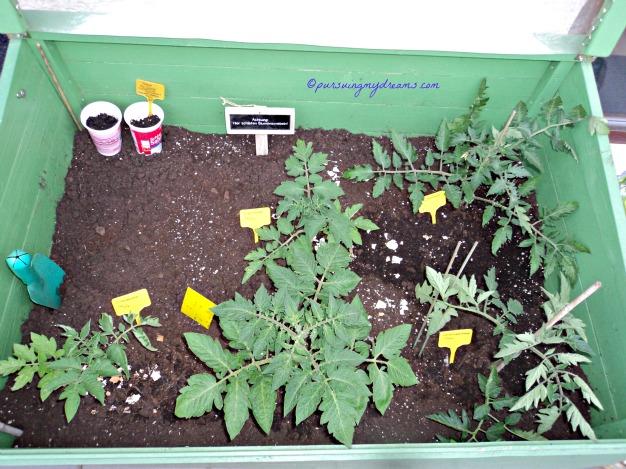 Taraaa inilah Beberapa Jenis tomat 2014 yang saya tanam. Bagian kiri atas masih kosong itu akan saya tanam tomat jenis lain