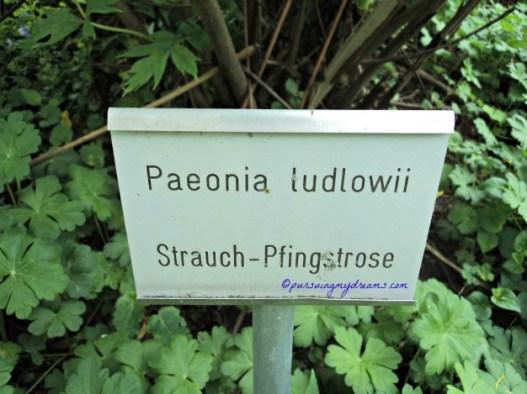 Plang Nama Bunga Peony