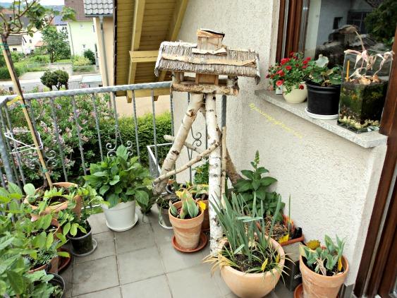 Senang sekali tanaman-tanamanku makin besarr