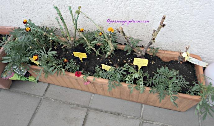 Balkon Depan Mulai Menghijau. 5 jenis root mawar yang bikin kesel karena tidak tumbuh juga huhuhu