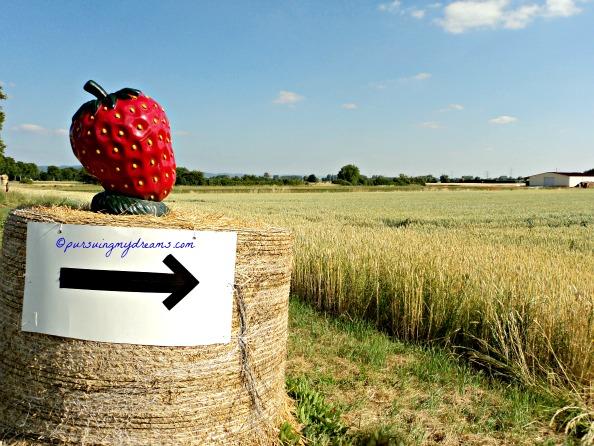 Ikuti tanda ini untuk Jalan Menuju Ladang Stroberi