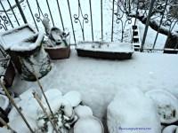 Salju tebal senang sekaligus sedih Hiks tanaman-tanamanku nasibnya malang banget