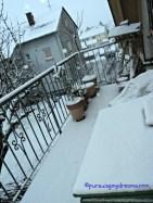 Pemandangan balkon belakang diselimuti salju tebal