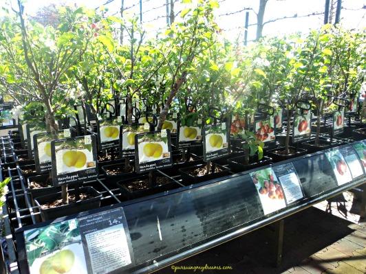 Pohon buah. Garten center Belanda