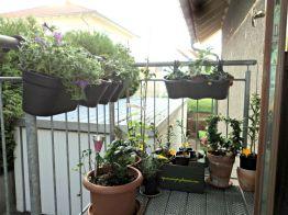 Di tangga masuk rumah. Tempat ini cocok untuk berbagai tanaman tidak tahan panas terik