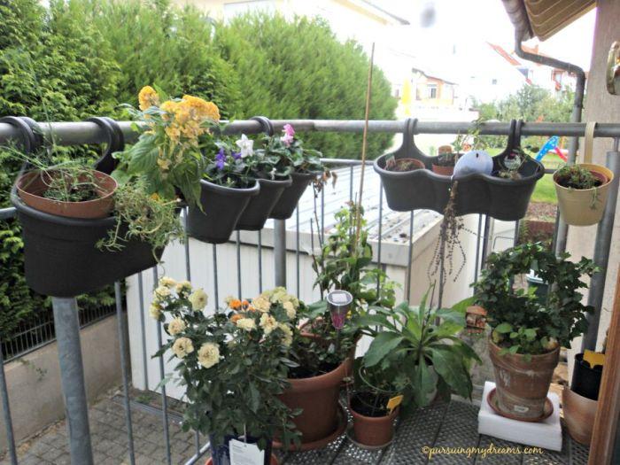 Pemandangan tanaman koleksiku di tangga luar