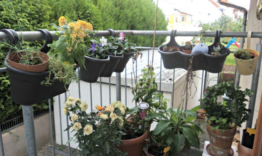 Curhat Berkebun 2015 – September Flowers
