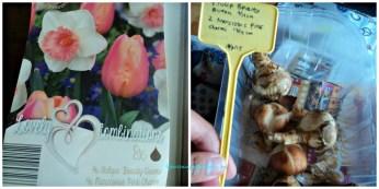 Bibit Tulip Pink Beauty Queen dan Narcissus Pink Charm