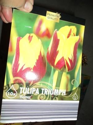 Tulip triump Helmar
