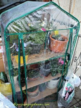 Semoga beberapa tanamanku bisa bertahan melewati winter ini