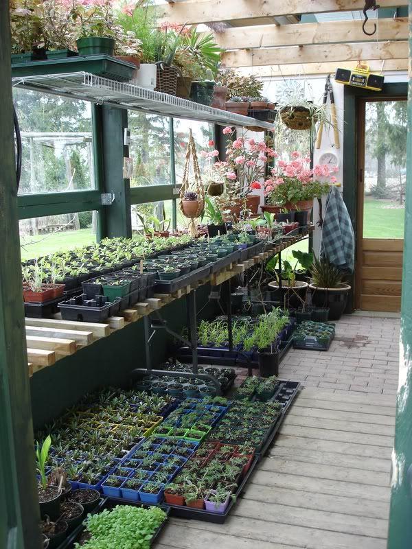 Pengen Greenhouse begini. Sumber foto https://www.pinterest.com/pin/390194755190116214/