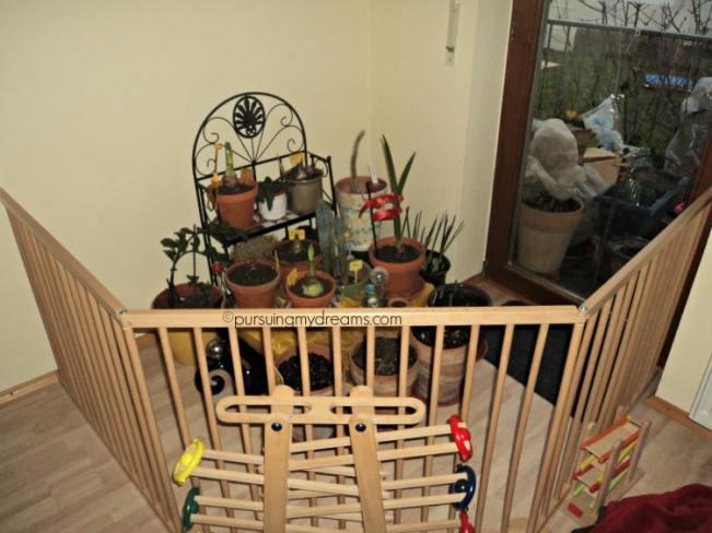 Begini cara saya Melindungi aneka tanaman hias dalam rumah dari jangkauan jagoanku yang masih kecil, kasih pagar aman deh tanaman-tanamanku