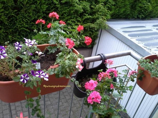 Aneka bunga Gantung, ada geranium, petunia, mint
