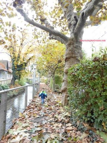 Musim gugur 2016 daun-daun hampir rontok semuanya