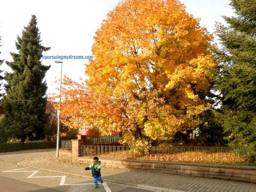 Cakep banget ya warna daun-daunnya. Pemandangan indah yang bisa dinikmati setahun sekali