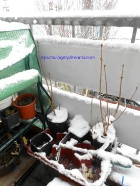 Pohon kecil mati suri musim semi akan numbuh kembali