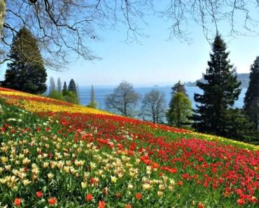 Impianku Mengunjungi Blumen Insel Mainau