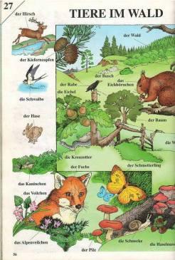 Hewan dalam Bahasa Jerman