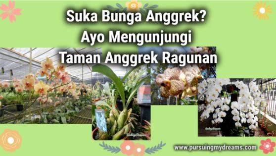 Suka Bunga Anggrek? Ayo Mengunjungi Taman Anggrek Ragunan
