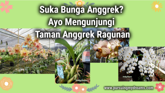 Suka Bunga Anggrek Ayo Mengunjungi Taman Anggrek Ragunan