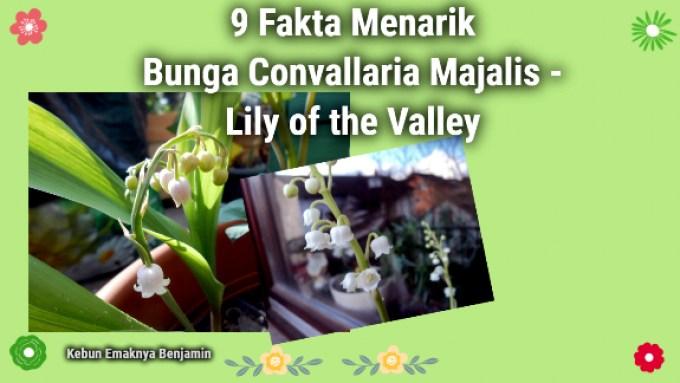 9 Fakta Menarik Bunga Lily of the Valley yang juga dijadikan Buket Bunga Pengantin