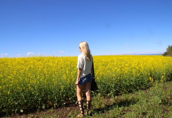 Alberta Canola Fields