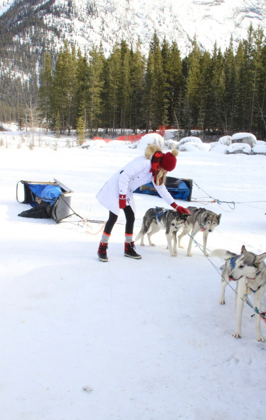 Dog Sledding in Canada, bucket list travel