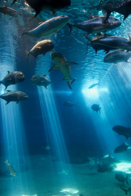 Sharks, Fish, Octopus, and sting ray at the Maui Aquarium