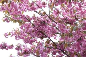 Spring in Harrison, British Columbia